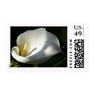 White Calla Lilies Over Black Background In Soft F Postage Stamp