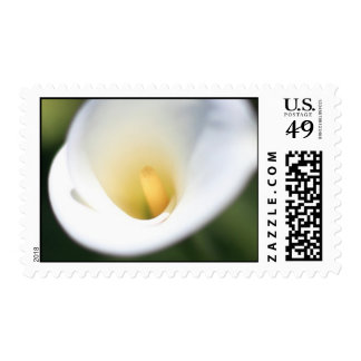 White Calla Lilly Postage