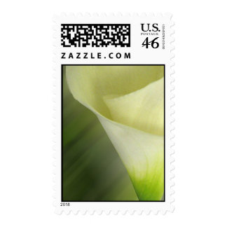 White Calla lily close up Postage Stamps