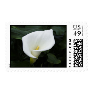 White Calla Lily Postage Stamp