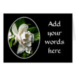 White Camellia Card