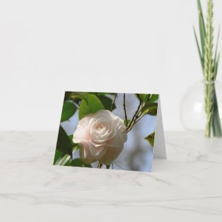 White Camellia Flower Folded Note Card