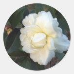 white camellia flower round stickers