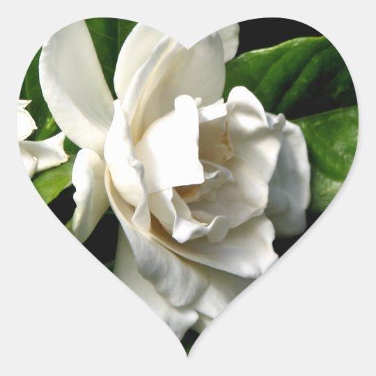 White Camellia Heart Sticker