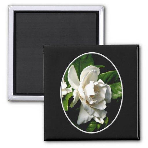 White Camellia Magnet
