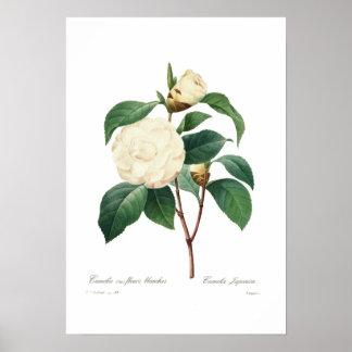 White camellia print