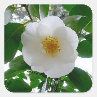 White Camellia Square Sticker
