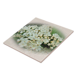 White & Cameo Cream Hydrangea Flowers Ceramic Tile