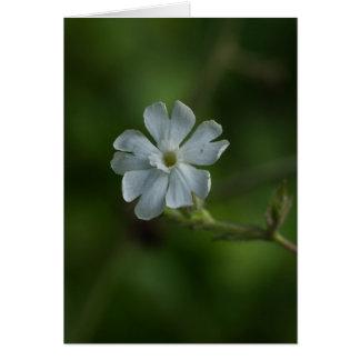 White Campion Wildflower Floral Card