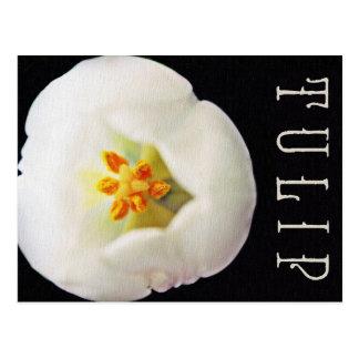 White Canvas Textured Tulip Postcard
