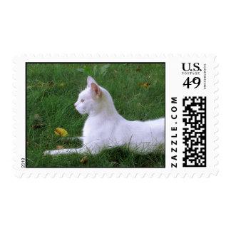 White Cat Art Photo USA Postage Stamp