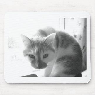 White Cat/Black & White Photo Mouse Pad