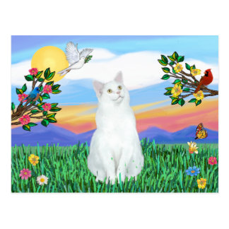 White Cat - Bright Life Postcard