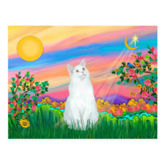 White Cat - Day Star Postcard