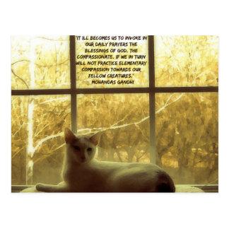 White Cat & Gandhi Compassion Quote Postcard