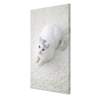 White cat looking up canvas print