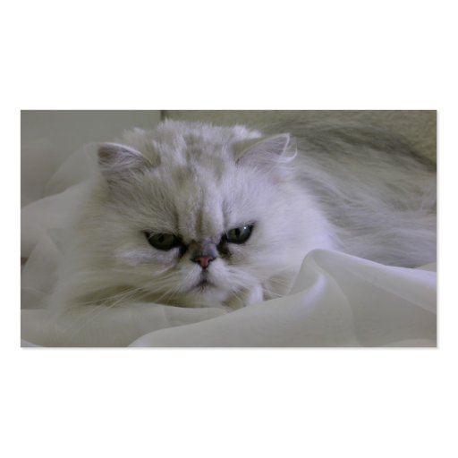 White cat lying on the bed business card