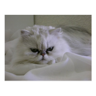 White cat lying on the bed postcard