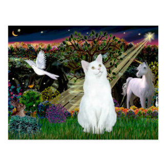 White Cat - Magical Woods Postcard
