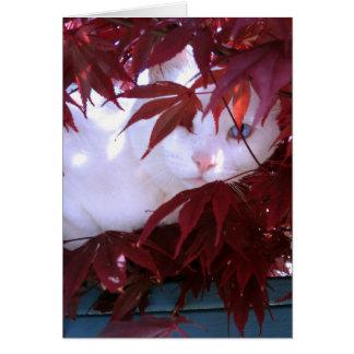 White Cat & Maple Card