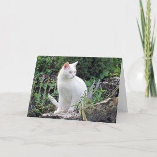 White Cat Nature Animal Photo Blank Greeting Card card
