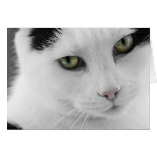 White Cat Note Card