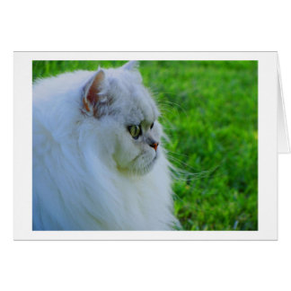 White Cat on a Summer Day Card