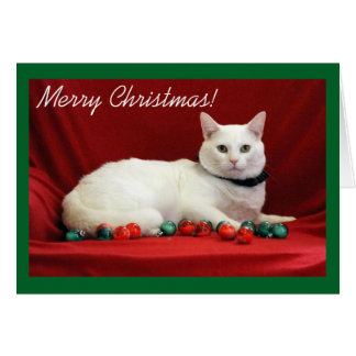 White Cat on Red Background Card