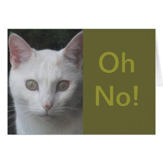 White Cat photo humorous get well card