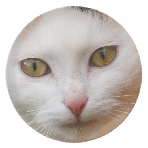 White cat party plate