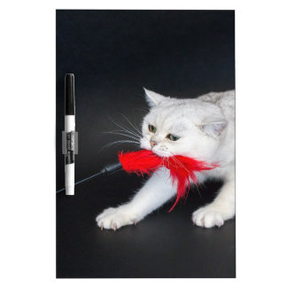 White cat playing pulling red toy Dry-Erase board
