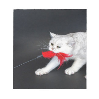 White cat playing pulling red toy notepad