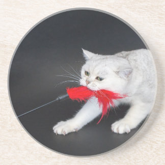 White cat playing pulling red toy sandstone coaster