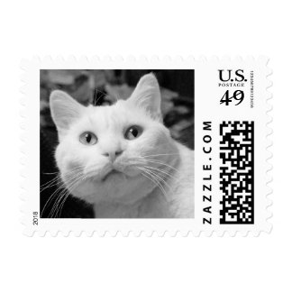 White Cat Postage Stamps Cat Lover Feline Friend