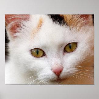 White cat poster