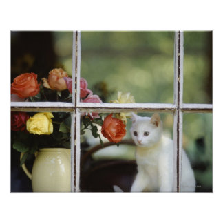 White cat sitting in window next to flowers poster