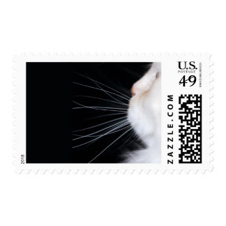 White Cat Stamps