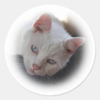 White Cat Round Stickers