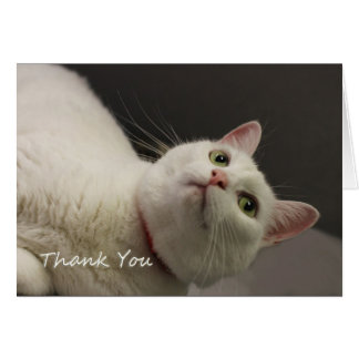 White Cat Thank You Card by Focus for a Cause