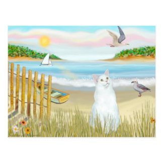 White Cat - The Rowboat Postcard
