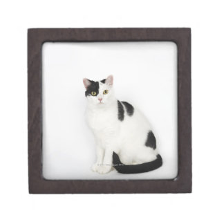 White cat with black spots gift box