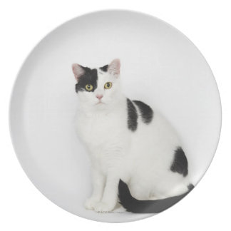 White cat with black spots plate