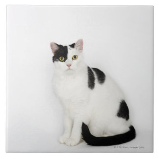 White cat with black spots tile