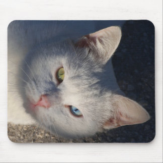 White cat with blue eye and green eye. mouse pad