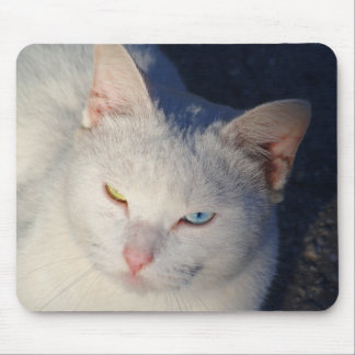 White cat with blue eye and green eye mouse pad