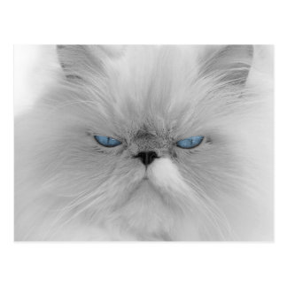 White cat with blue eyes postcard