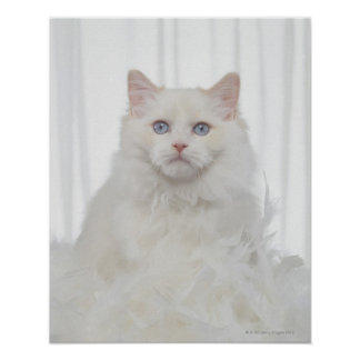 White Cat with Feathers Poster
