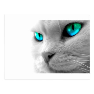 White Cat with Green Blue Eyes Postcard