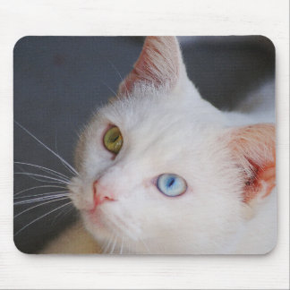 White cat with one green eye & one blue eye mouse pad