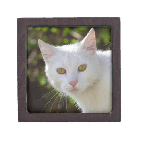 White Cat With Yellow Eyes Gift Box